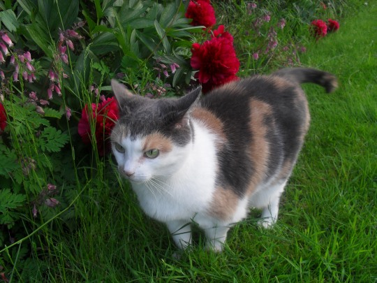 Hattie in the garden - photo taken by Abigail Robinson