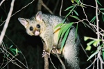 a possum in a tree at night