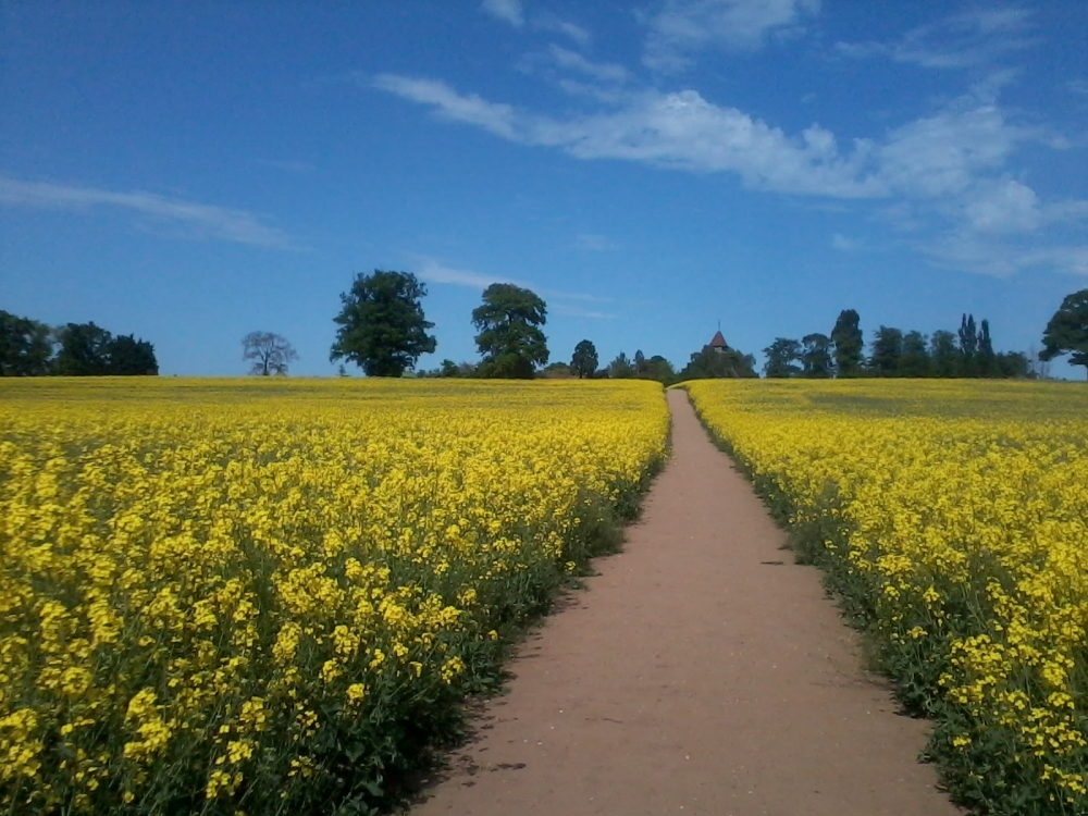 A Golden Field, a Short Life That Touched Many Hearts, and a Poignant Moment in a Country Churchyard (1/4)