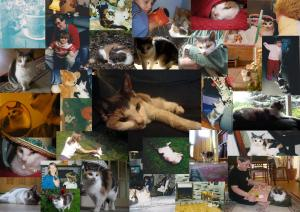 Happy memories of Hattie, beloved family pet 1996-2013 (photo credits: Abigail Robinson)