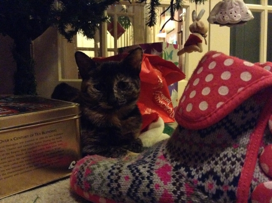 Molly under the Christmas Tree 17 Dec 2013 (photo credit Abigail Robinson)