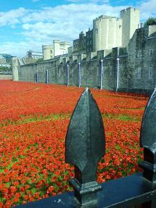 art installation at the Tower of London commemorating 1st World War (photo credit SC Skillman)