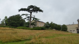 View across the new wildflower meadow to the chapel at Compton Verney