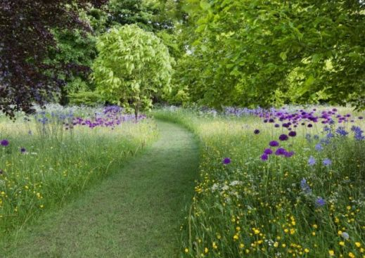 wildflower meadow at Highgrove