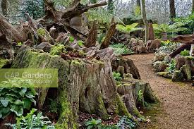 highgrove-garden-walk-through-the-stumpery