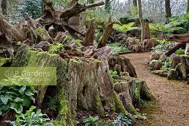highgrove-garden-walk-through-the-stumpery