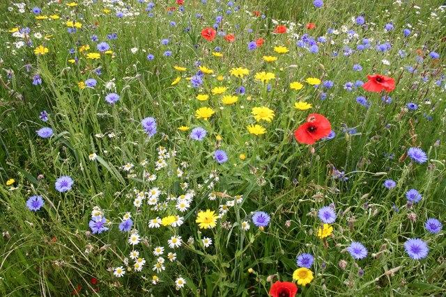 An inspiring wildflower meadow.