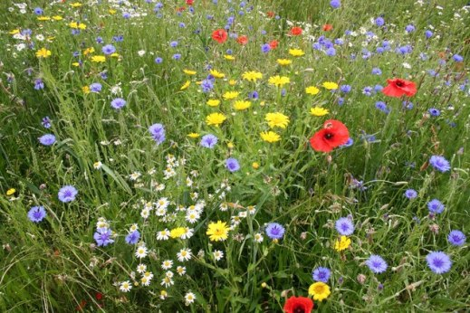 An inspiring wildflower meadow.