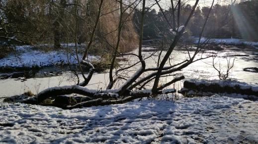 river at Saxon Mill image 5.jpg