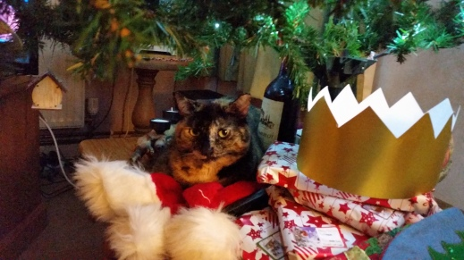 Cat amongst Christmas gifts beneath Christmas Tree