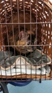 Cat in cat basket