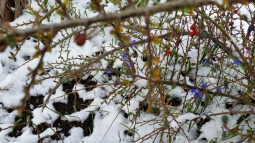 spring flowers and berries in snow