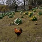 A scene at Prinknash Bird and Deer Park