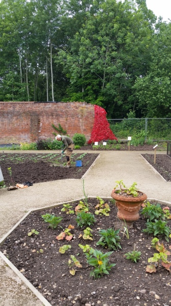 View of Guys Cliffe Walled Garden with poppy installation