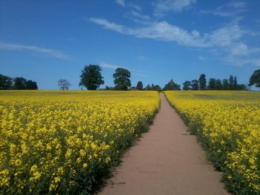 Milverton Hill, Warwick, in June - photo credit Abigail Robinson
