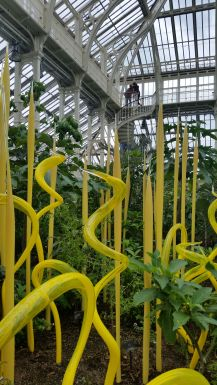 yellow glass sculpture in Temperate House Dale Chihuly