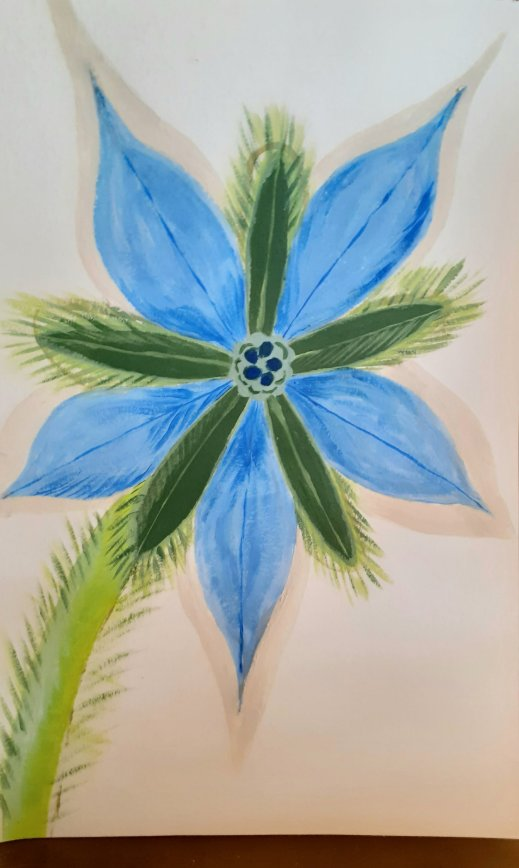 borage flower in acrylic paints SC Skillman lockdown art