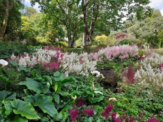 garden design Lanhydrock National Trust Cornwall SC Skillman