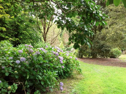 Gardens Trellisick National Trust Fal Estuary Cornwall SC Skillman
